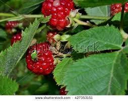 fruit garden stock images royalty free images u0026 vectors