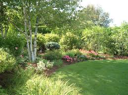 Lawn Landscape by Softscapes Lawn Installation Hydro Seeding Trees Shrubs And