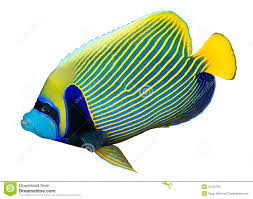 angel fish clipart clipart panda free clipart images