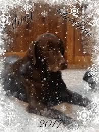 Christmas Dog Meme - christmas dog meme gifs tenor