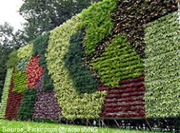 vertical gardens vertical gardens are in vogue yates