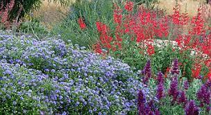 Drought Tolerant Landscaping Ideas Drought Resistant Commercial Landscaping Ideas San Jose Bay Area