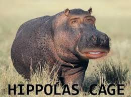 Hippo Memes - hippo meme memes celebrity memes lol funny humor lol daily salsa