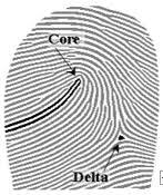core and delta jpg