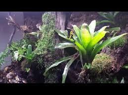 custom rainforest vivarium terrarium paludarium youtube
