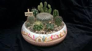 popular tropical plants indoor plant tips com