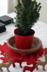 100 top live christmas trees how to make sheet christmas