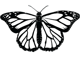 coloring page butterfly monarch monarch butterfly coloring pages this is monarch butterfly coloring