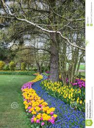 spring flower garden stock photo image 39611021