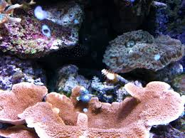 christmas tree rock coral part 40 reef2reef home decorating