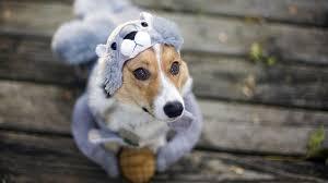 halloween puppies wallpaper dogs abduzeedo