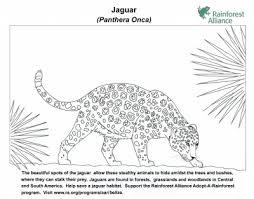 jaguar coloring page rainforest alliance