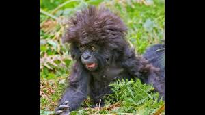 Bad Hair Day Meme - funny animals bad hair day slideshow youtube