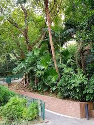 Hong Kong Zoological And Botanical Gardens Hong Kong Zoological And Botanical Gardens Picture Of Hong Kong