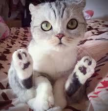 cutest kitty ever eyebleach