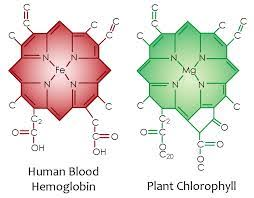 How Do You Get Bed Sores Amazing Discovery Plant Blood Enables Your Cells To Capture Sunlight