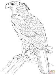 philippine eagle coloring page free printable coloring pages