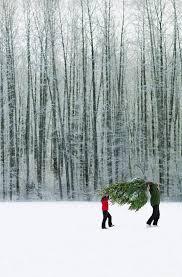 best 25 christmas tree shop locations ideas on pinterest car