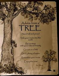 best 25 tree quotes ideas on religious quotes