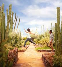 Arizona best place to travel images Best 25 phoenix things to do ideas phoenix arizona jpg