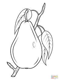 pear on branch coloring page free printable coloring pages