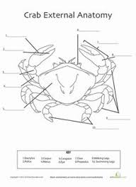 octopus anatomy octopus worksheets and anatomy