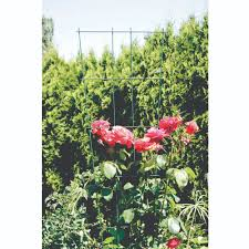 plant trellis peak products canada