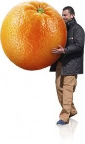 livraison de fruits au bureau la livraison de corbeilles de fruits au bureau
