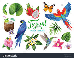 tropical collection jungle party cocktails exotic stock vector