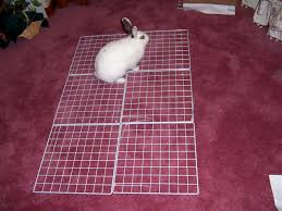 How To Build A Rabbit Hutch And Run How To Build An Indoor Bunny Cage