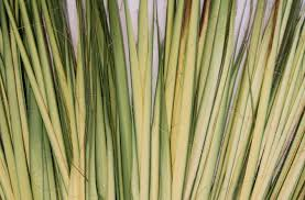palms for palm sunday bulletin insert palm sunday a