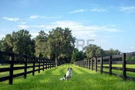 australian shepherd off leash australian shepherd mix images u0026 stock pictures royalty free