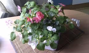 обзор смартпота click u0026 grow или как вырастить сад на своем