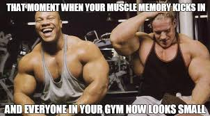 Muscle Memes - will muscle memory help you regain lost muscle