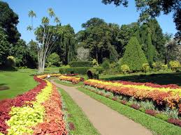 What Are Botanical Gardens Royal Botanical Gardens Peradeniya