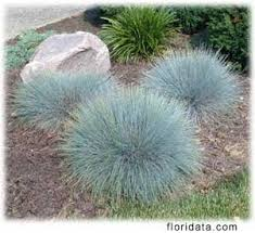 shade ornamental grasses