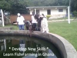 Backyard Fish Farming Tilapia Tilapia Fish Farming Fish Farming In Ghana West Africa Fish
