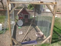 ohylimes chickens chickens in california backyard backyard