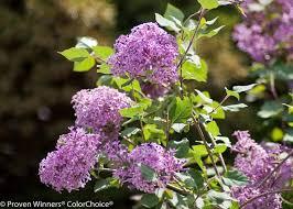 22 best make a flower bouquet images on pinterest proven winners