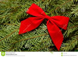 red bow on evergreen christmas tree background royalty free stock