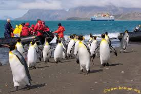 Georgia cruise travel images Falklands south georgia and antarctica cruise wow jpg