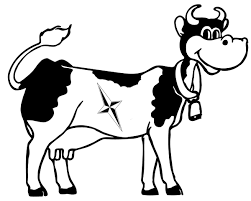 cow coloring pages cow cowcoloringpages nicecoloringpages org