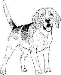 dog beagle puppy coloring pages glum