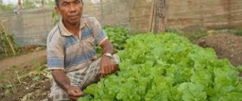 vegetable growing a sustainable livelihood option u2013 the cambodian