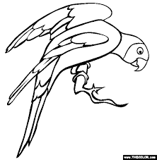 pirate parrot coloring page click the african grey parrot
