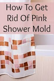 Mold Growing In Bathroom Pink Shower Mold What Is It How Do I Get Rid Of It Home Ec 101