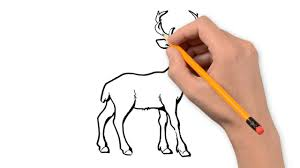 deer animals pencil to draw step by step youtube