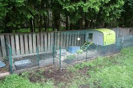 Can I Raise Chickens In My Backyard What You Need To Know About Backyard Chickens Globalnews Ca