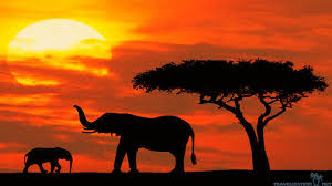 all joy african safari wallpapers travelization