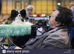 boxer dog crufts 2014 crufts stock photos u0026 crufts stock images alamy